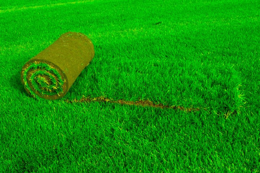 Купить рулонный газон в Ростове